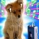Descarga fondos Cachorrito oyendo música