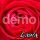 Descarga fondonombres Rosa roja