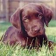 Descarga fondos Cachorrito en la hierba