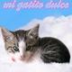 Descarga fondos Mi gatito dulce
