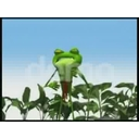 Karate Frog