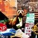 Descarga fondos Perro de ciudad